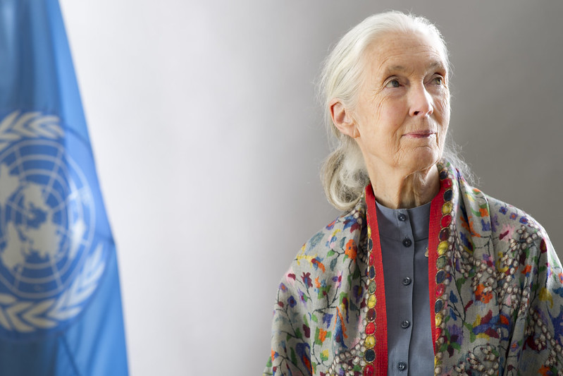 Jane Goodall, Ph.D., DBE, Founder of the Jane Goodall Institute & U.N. Messenger of Peace